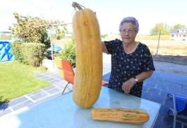 pepino gigante camponaraya /