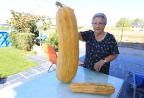 O Telexornal informará sobre hortalizas xigantes para contrarrestar as novas sobrerecortes