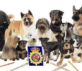 Unha redada en Ortigueira incauta máis de 4000 cans e 7000flautas