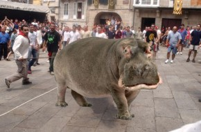 Allariz utilizará un hipopótamo na próxima Festa doBoi