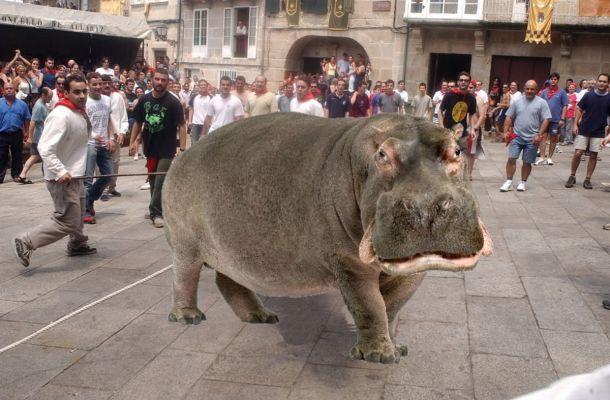 hipopotamo festa do boi