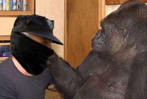 Koko, o gorila máis intelixente do mundo, felicitando ao policía pola súa graduación