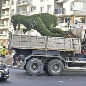Un veciño de Nigrán trata de levar o Dinoseto para poñelo no xardín da súacasa