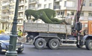 dinoseto-camion