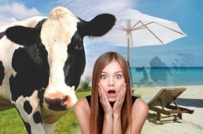 Pregúntanlle se ten vacas e responde que un mes aoano