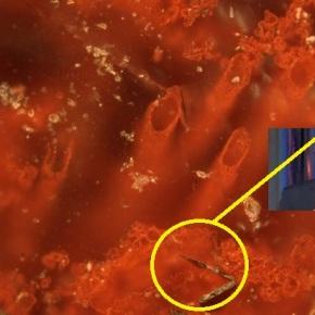 O fósil máis antigo de vida na Terra contén un pelo deGayoso
