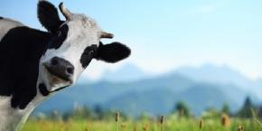 Extraños seres que se comunican con las vacas se manifiestan enCompostela