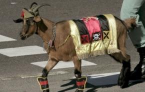 A cabra da Lexión lanza gritos fascistas durante o desfile das ForzasArmadas