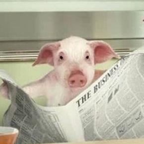 Fan a matanza léndolle ao porco artigos de EduardoInda