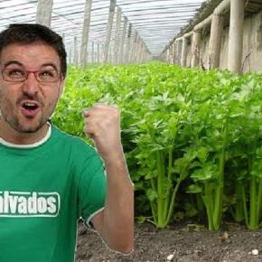 Escándalo na industria vegana tras a visita de Jordi Évole a unha explotación deapio