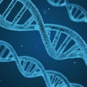 Un estudo xenético revela que os vigueses son todos deOurense