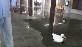 O Sergas instala fontes e estanques ornamentais noshospitais